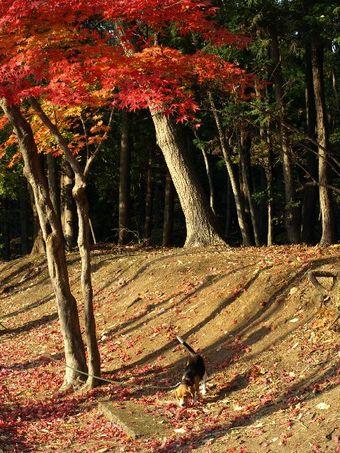 Koyuki_200711_e19