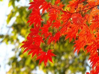 Koyuki_200711_e20