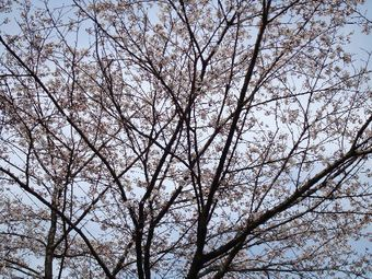 2008_04a10