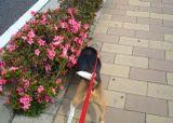 2008_05_26_04