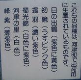 2008_06_15_2_02