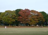 2008_11_02_06
