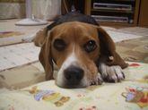 2008_11_08_08