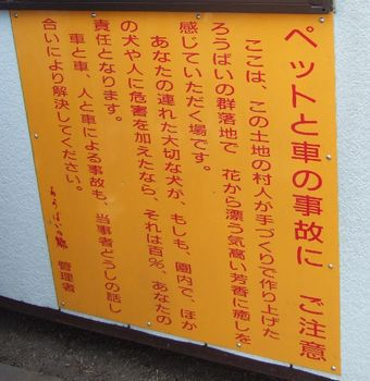 2009_01_17_06