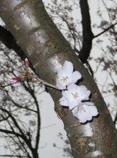2009_03_27_12