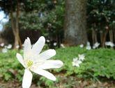 2009_04_05_05