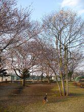2009_04_06_04