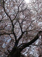 2009_04_12_309
