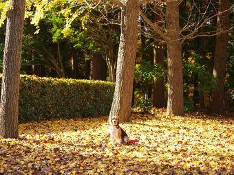 2009_11_20_09