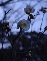 2009_01_24_101