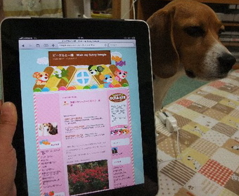 2010_mac01